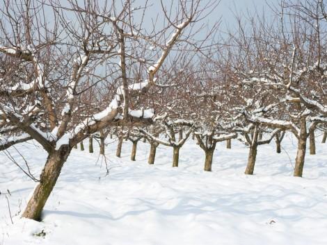 Durva fagyokkal búcsúzik a február és kezdődik a március – mi lesz a növényekkel?