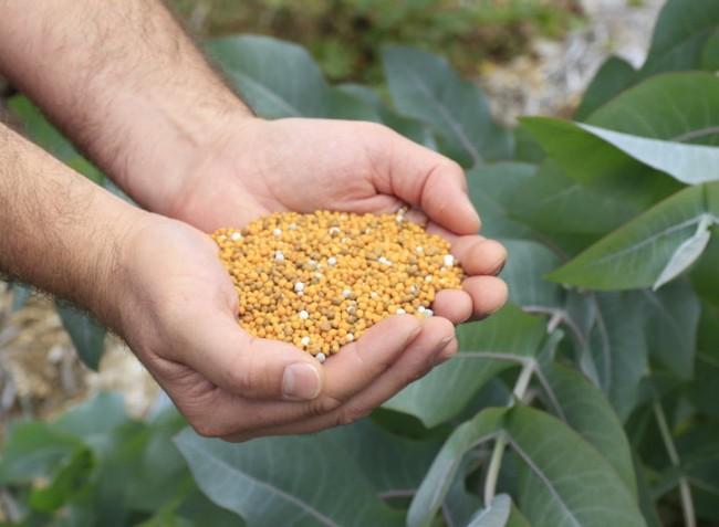 Precíziós gazdálkodás szabályozott műtrágyával