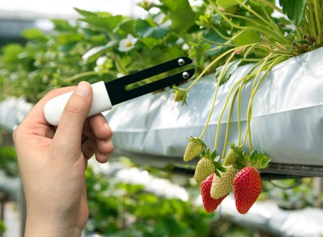 Precíziós kertészeti megoldások a hatékonyabb zöldség- és gyümölcstermesztésért