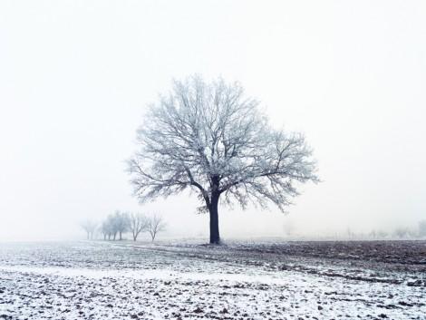 Növényvédelmi előrejelzés: Itt az igazi tél a tavaszban!