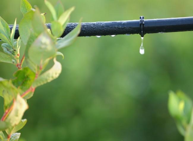 Az öntözővíz minőségéhez igazított tápoldatozással költségeink alacsonyabbak, a minőség pedig magasabb lesz