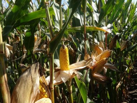 Így növelhetjük a termésmennyiséget
