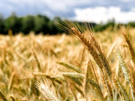 Még tovább erősödik az orosz mezőgazdasági kivitel