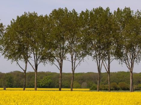 Brüsszel a bioüzemanyagok termelésének visszafogását tervezi