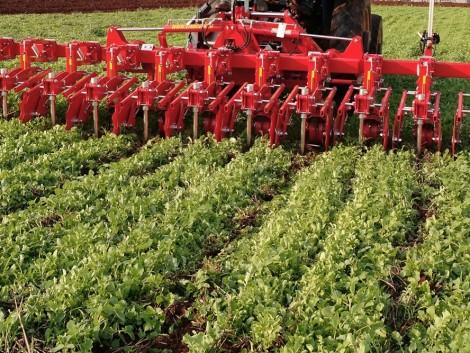 Jó tanácsok sorközműveléshez, a gyorsabb gabonaátvételhez és a sertéspestis megelőzéséhez