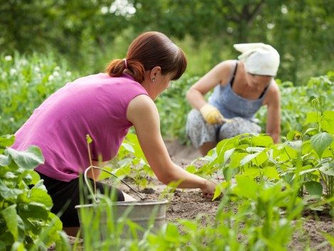 Évek óta probléma az agráriumban a munkaerőhiány