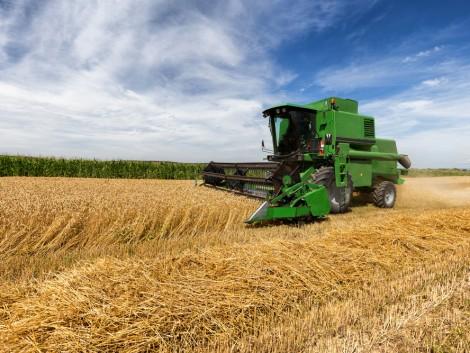 Biztató a magyar gazdáknak: alacsonyabb globális búzatermés