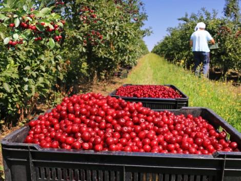 A gabonafélék és a gyümölcsök ára bőven meghaladja a tavalyit