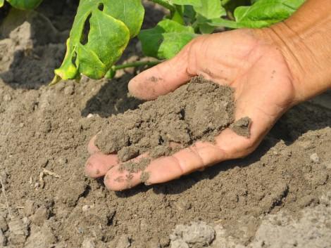 Hogyan alakítsuk a talajszerkezetet és hogyan állítsuk meg a talajromlást?