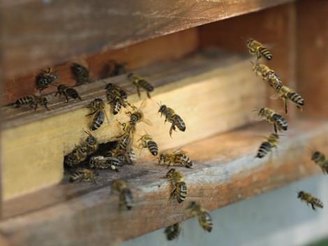 Méhbetegség Pécsett! Zárlatot rendeltek el 9 településen