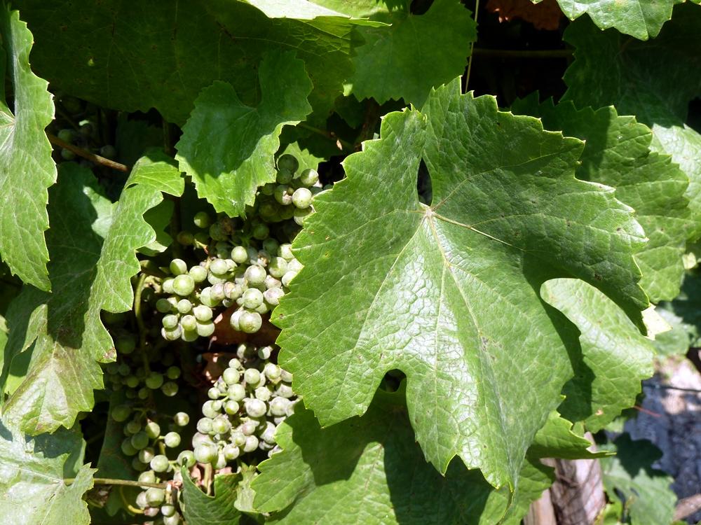 Gyümölcsfák: Lehet-e virágzásban permetezni?
