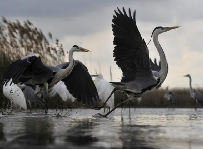 Veszélybe kerülhetnek Magyarország vizes élőhelyei