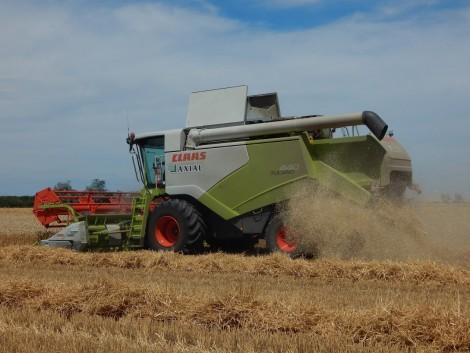 Idén jó gabonatermés várható
