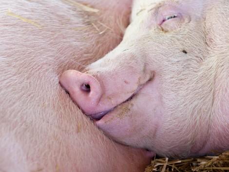 Csökkent az ASP-vel fertőzött terület Heves megyében
