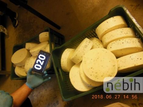 Rovarlárva a tejtermékekben – lecsapott a Nébih