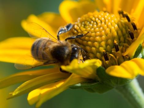 Nagy István: ki kell deríteni, miért pusztulnak tömegesen a méhek