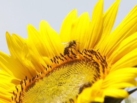 Több mint 300 méhészet jelzett méhpusztulást