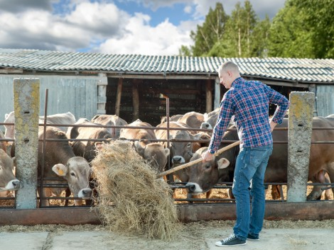 A tejválság a padló alá süllyeszti a marhahúsárakat