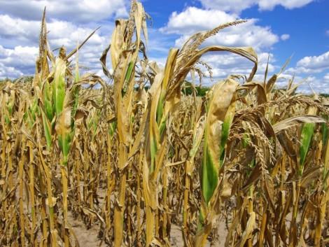 Rendkívüli szárazság okozott károkat Szlovákiában