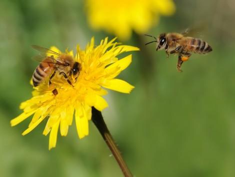 A rovarpusztulás megzavarhatja az élelmiszerlánc egyensúlyát