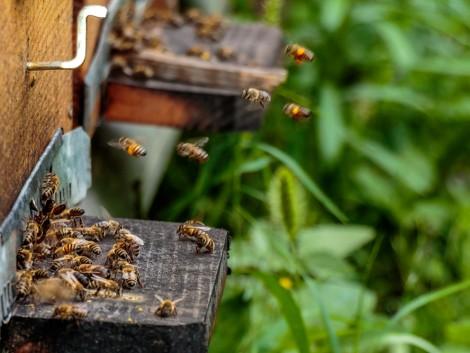A méhpusztulást a mezőgazdaságnak kell megállítania