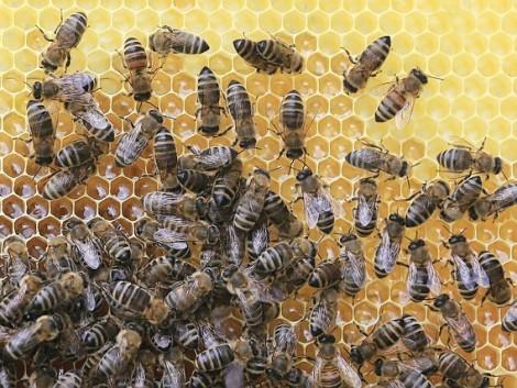 Augusztus 3-ig igényelhető a méhanya-támogatás!
