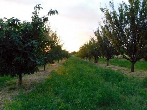 Fellendülőben az agroerdészet Magyarországon