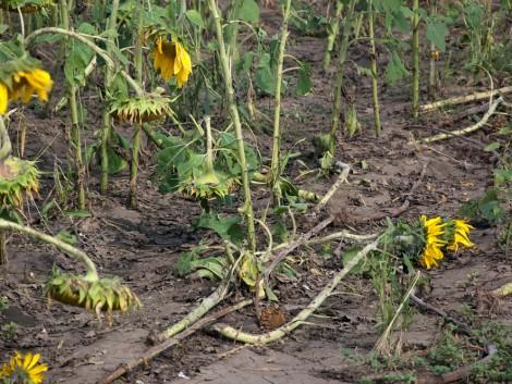 Pénzügyi védelem agrárkockázatok ellen