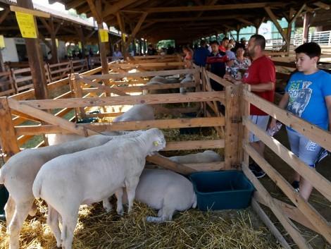 36 ezer látogató vett részt az idei debreceni Farmer Expón