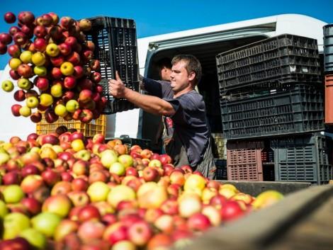 Az almatermelőkkel egyeztetett az agrárminiszter