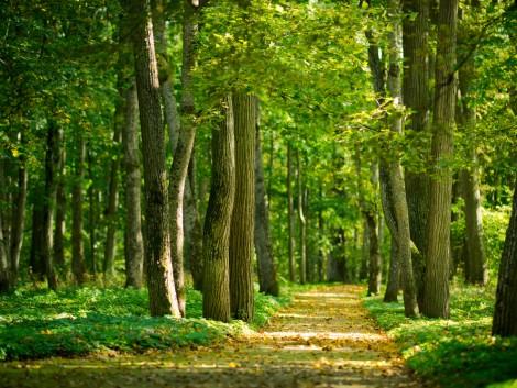 Módosult az erdőterületeknek nyújtott kompenzációs kifizetések pályázat
