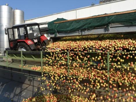 Az almatermelők most nyertek, de még sok a megoldandó probléma