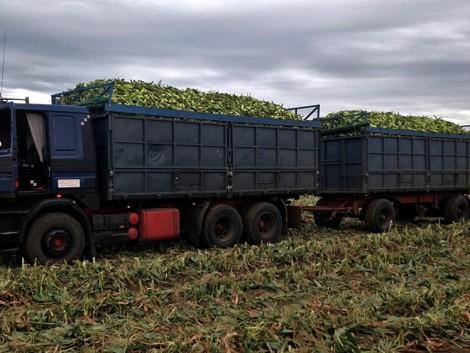 Terepjáró teherautó a gazdaságban