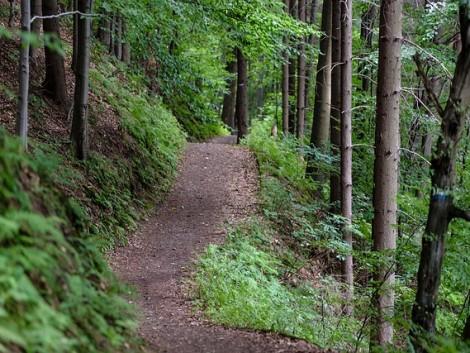 Erdészeti továbbképzés indul