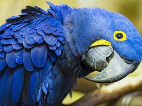 Újabb nyolc madárfaj halt ki az elmúlt években
