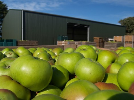 Ukrajna gyümölcsexportja gyors ütemben növekszik