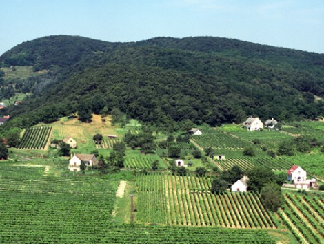 Az agrártárca törvénymódosítással védené meg a szőlőterületeket