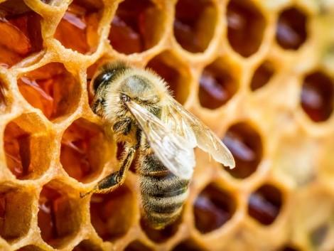 Méhészek figyelem! Megkezdődtek a kifizetések