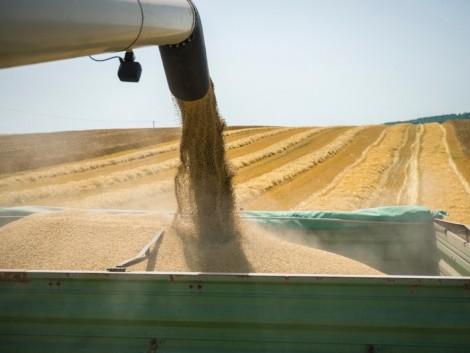 A gabonaárak emelkedtek, a gyümölcsárak nagyot zuhantak
