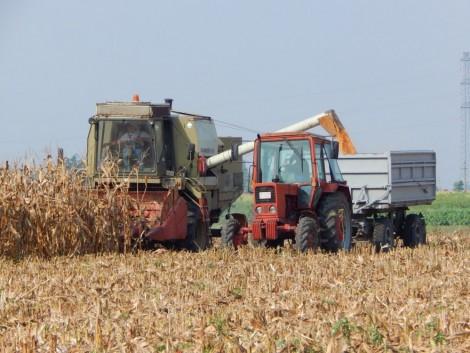 Rekordszintre emelkedhet a kukoricaimport az EU-ban