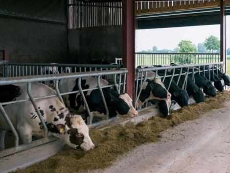 57 milliárd forint jut a tejtermelő gazdaságoknak