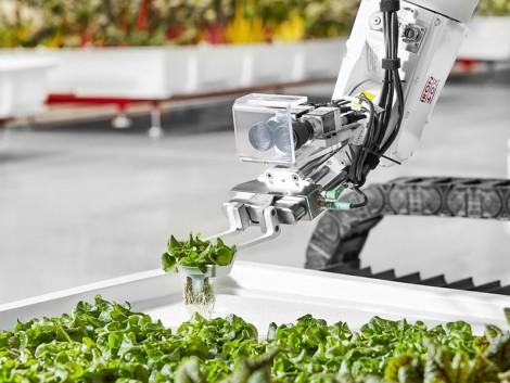 Angus, a robot gondozza a növényeket