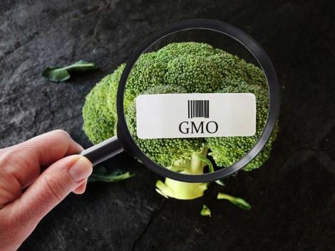 Hazánk élelmiszeripari fejlesztési stratégiájának egyik legfontosabb pillére a GMO-mentesség