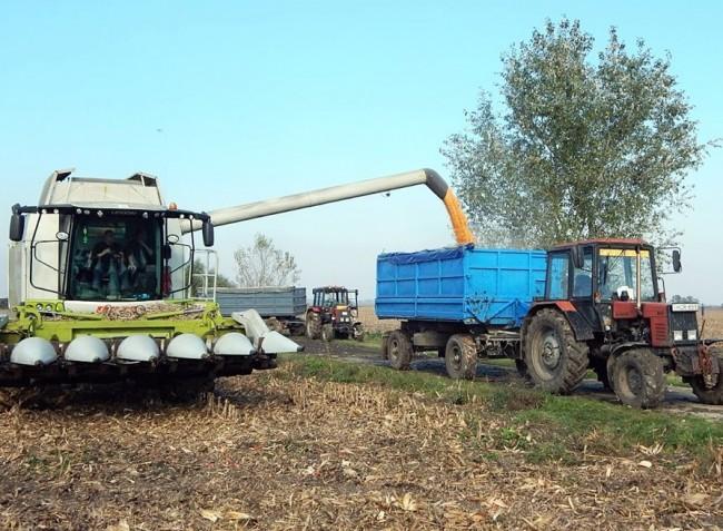 Kedvező évet zártak a kukoricatermelők, de magasabb árakban reménykednek