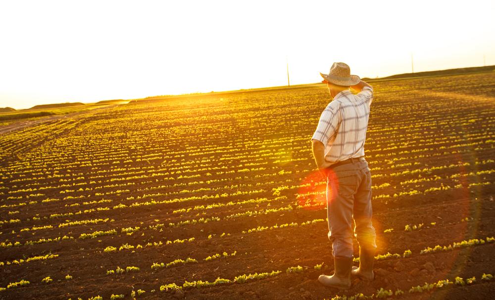 Mezőgazdasági termelő és farmert társkereső oldal