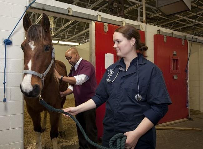 A legtöbb állatorvos nem is megy haszonállat közelébe