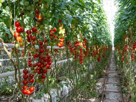 Hogyan lesz egy magyar kertészeti vállalkozás igazán sikeres?
