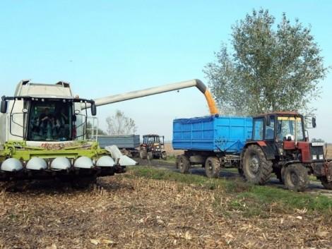 Hatalmas az idei román gabona- és kukoricahozam