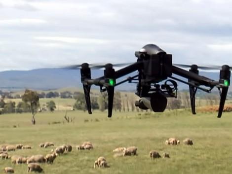 Drónok menthetik meg a beteg bárányokat (VIDEÓ)