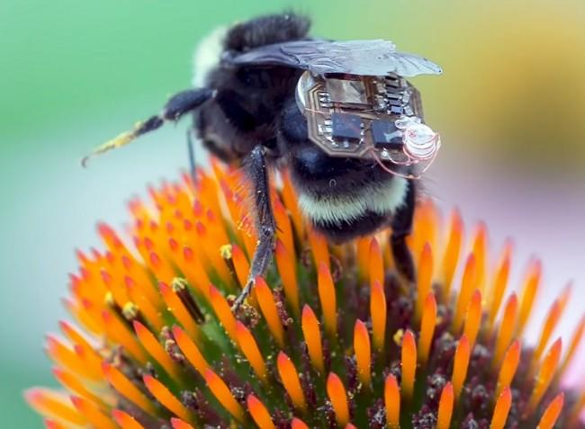 A méhekre kapcsolt apró hátizsákokkal figyelik meg a növények állapotát (VIDEÓ)
